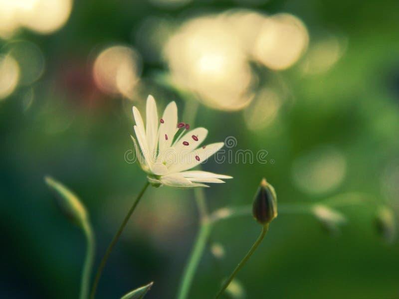Campo de las flores de la margarita foto de archivo