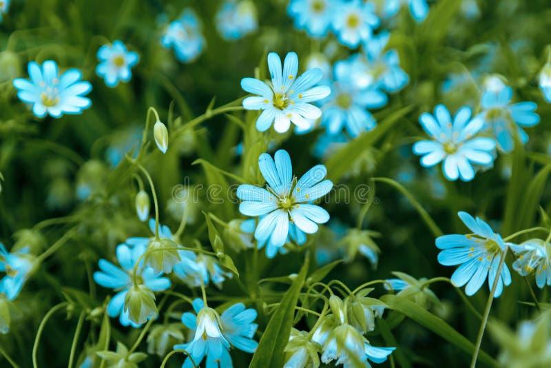 Campo de las flores de la margarita foto de archivo libre de regalías