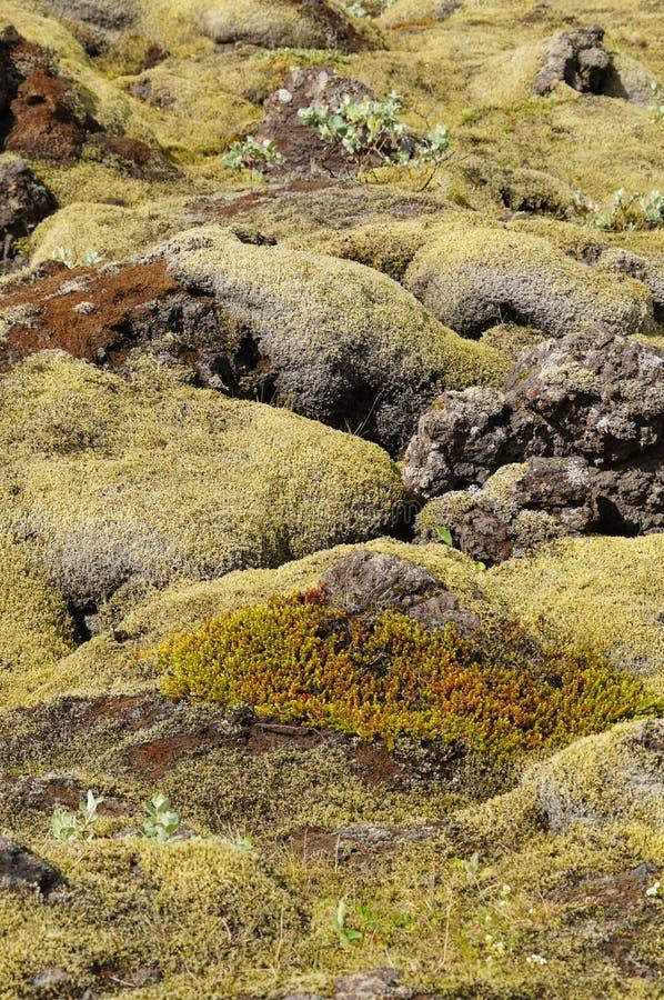 Campo de lava coberto com o musgo verde, Islândia imagens de stock