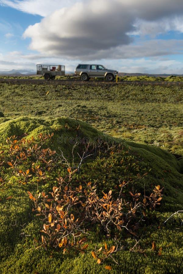 Campo de lava de Grindavik en Islandia que cubre por el musgo verde con primero plano amarillo de la planta y la impulsión del co fotografía de archivo libre de regalías