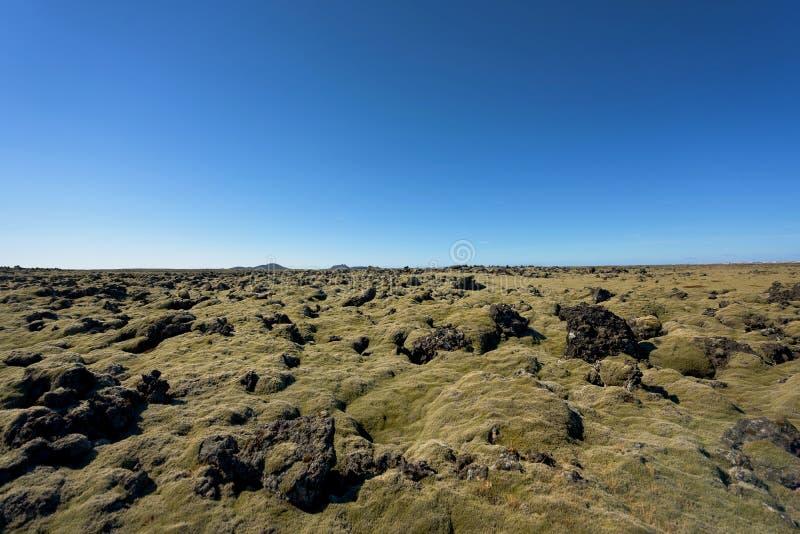 Campo de lava de Islândia coberto com o musgo verde imagem de stock