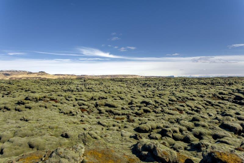 Campo de lava de Islândia coberto com o musgo verde foto de stock