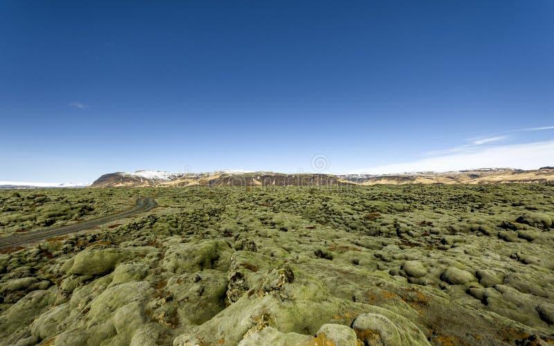 Campo de lava de Islândia coberto com o musgo verde fotografia de stock royalty free