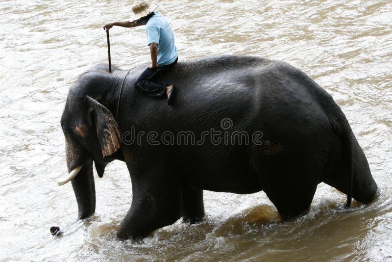Campo de los elefantes fotos de archivo libres de regalías