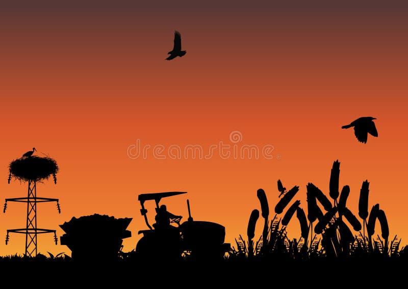 Campo de maíz ilustración del vector