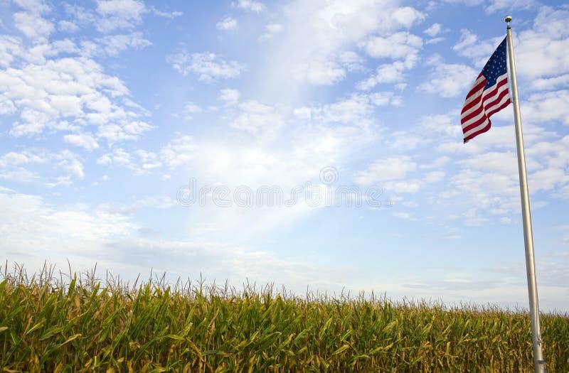 Campo de maíz americano foto de archivo libre de regalías