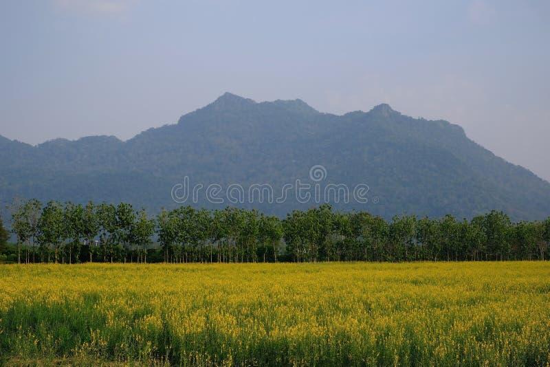 Campo de maíz con Mountain View imagenes de archivo