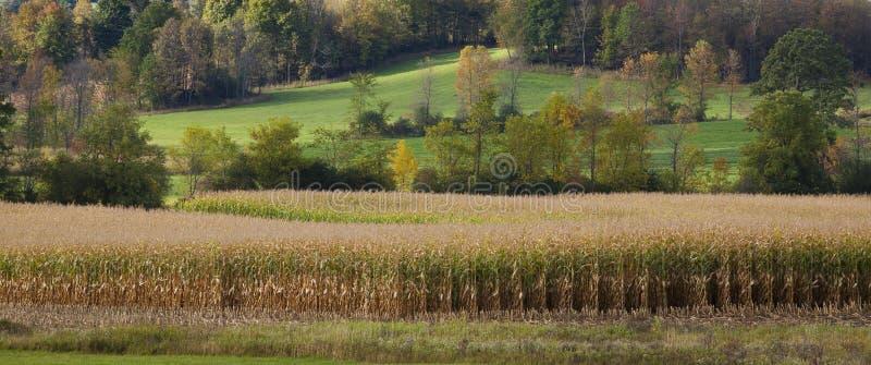 Campo de maíz con un paisaje montañoso imagen de archivo libre de regalías