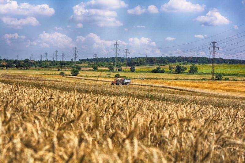 Campo de maíz de oro imagen de archivo