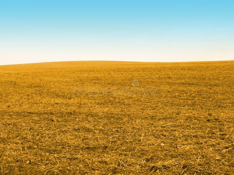 Campo de maíz del oro imagenes de archivo