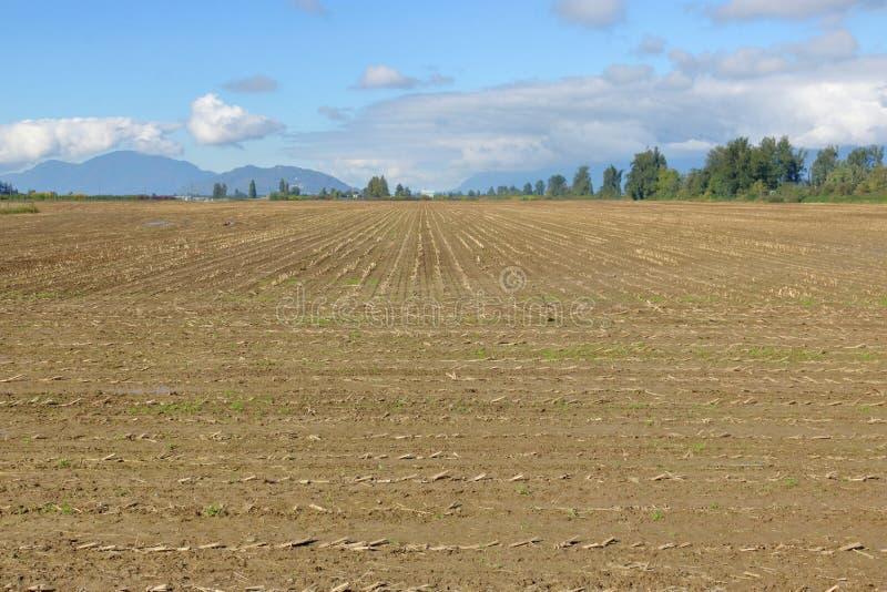 Campo de maíz despejado de la cosecha imágenes de archivo libres de regalías