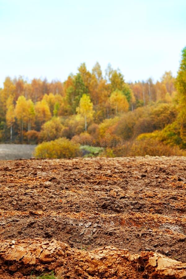 Campo de maíz en otoño imágenes de archivo libres de regalías