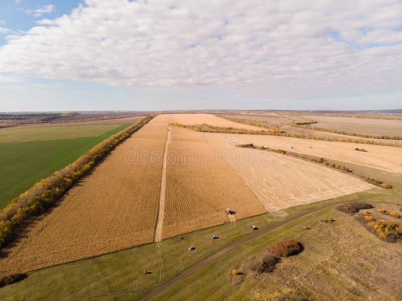 Campo de maíz que cosecha el tiroteo del otoño del aire foto de archivo