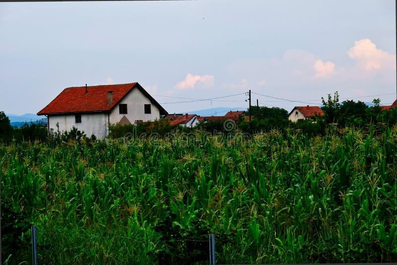 Campo de maíz y casa del pueblo, Serbia foto de archivo
