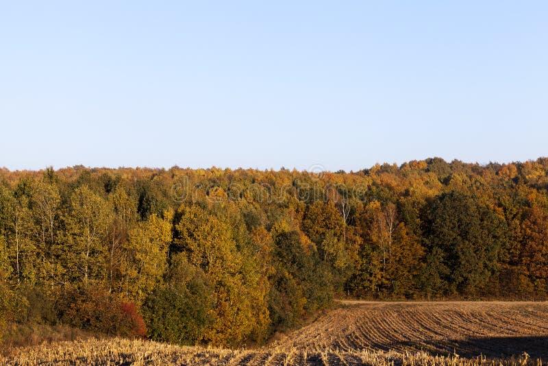 Campo de maíz del otoño foto de archivo libre de regalías