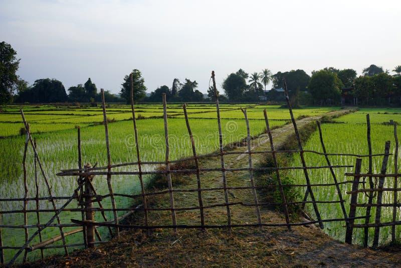 Campo de madera de la cerca y del arroz fotos de archivo libres de regalías