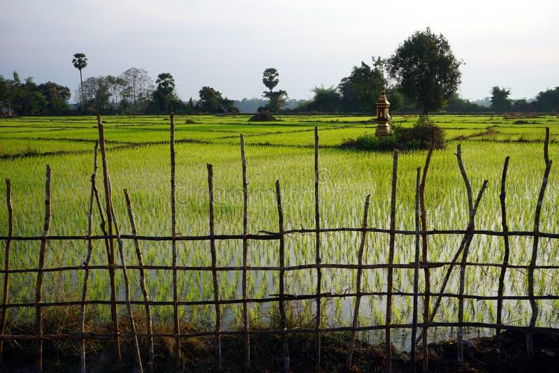 Campo de madera de la cerca y del arroz fotografía de archivo libre de regalías