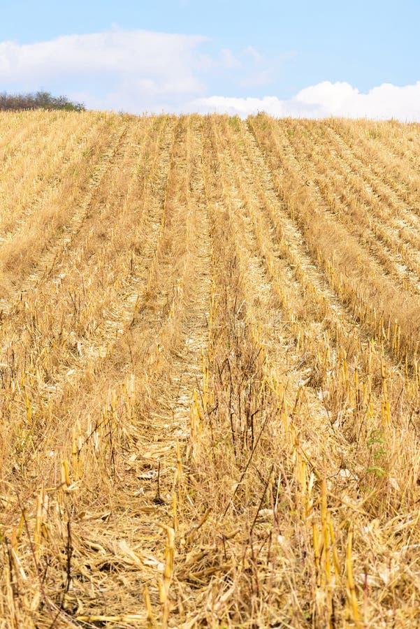 Campo de milho após a colheita no outono em Moldova fotos de stock royalty free