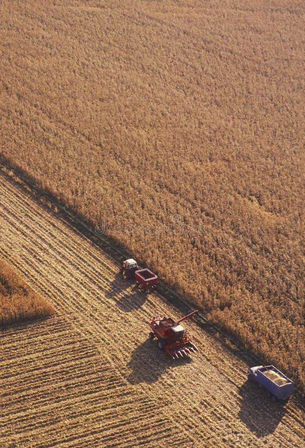 Campo de milho com equipamento de exploração agrícola pesado imagem de stock