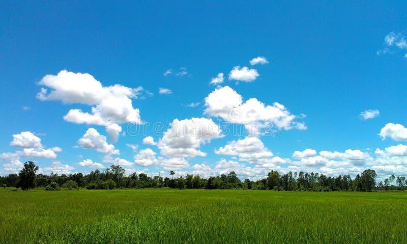 Campo de milho da exploração agrícola imagens de stock