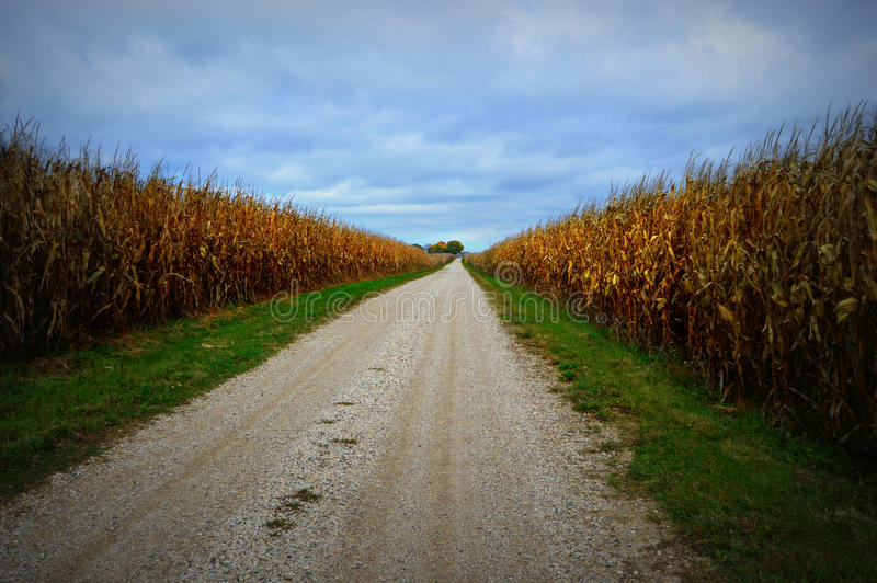 Campo de milho, estrada do cascalho foto de stock