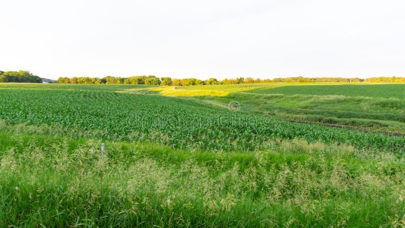 Campo de milho de Iowa fotos de stock