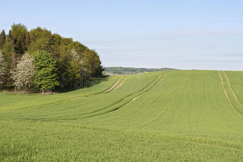 Campo de milho na floresta foto de stock royalty free