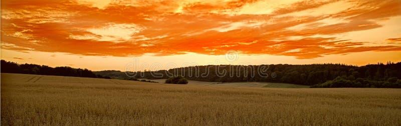 Campo de milho no por do sol imagens de stock