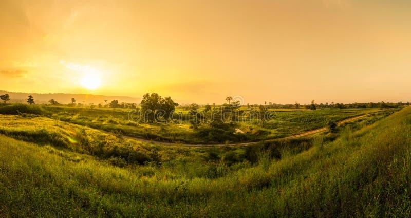 Campo de milho no por do sol agrícola e claro e na montanha para trás imagem de stock