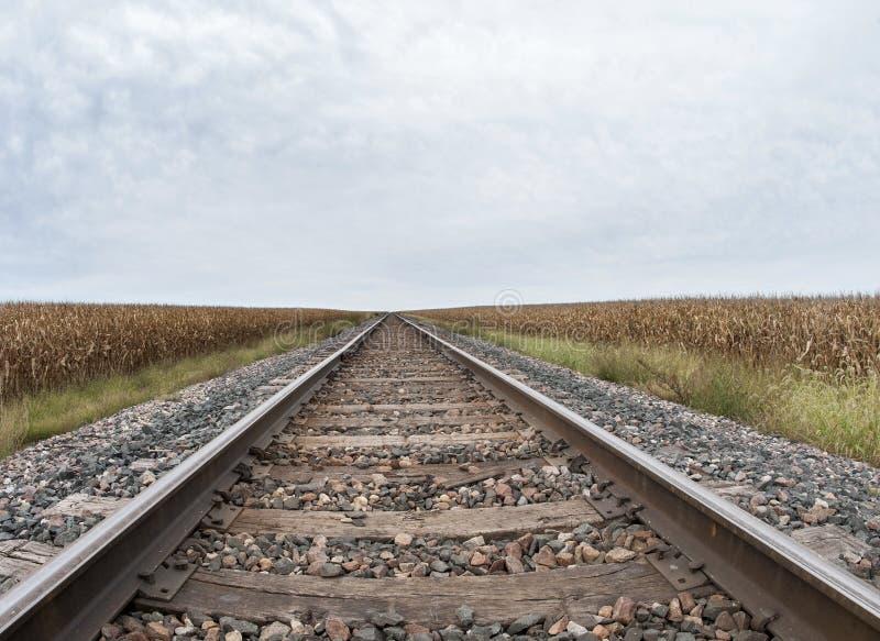 Campo de milho pelas trilhas de estrada de ferro fotos de stock royalty free