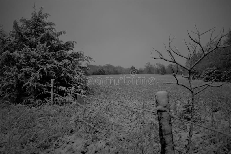 Campo de neve preto e branco imagem de stock royalty free