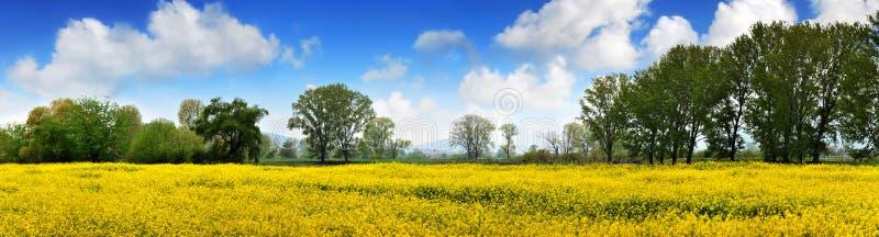 Campo de Rapen e céu azul profundo fotografia de stock royalty free