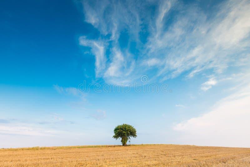 Campo de restolho com única árvore foto de stock