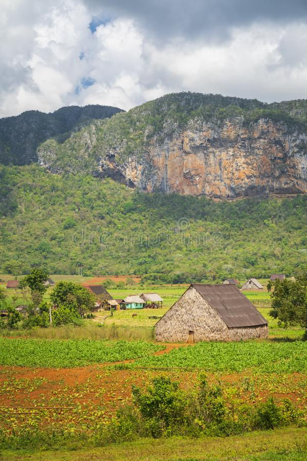 Campo de tabaco en el parque nacional de Vinales, la UNESCO, Pinar del Rio Province foto de archivo libre de regalías