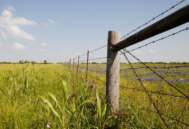 Campo de Texas, EUA fotografia de stock royalty free