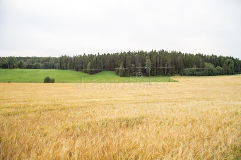 Campo de trigo imagenes de archivo