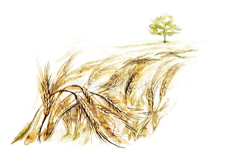 Campo de trigo stock de ilustración