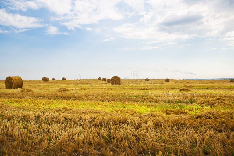Campo de trigo bonito com os pacotes redondos de encontro, céu azul do verão com nuvens imagem de stock
