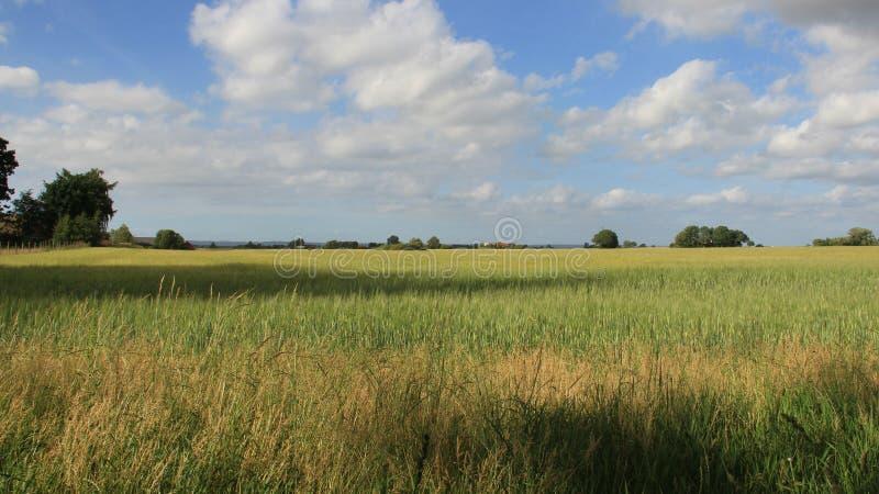 Campo de trigo com o céu nebuloso na Suécia imagens de stock