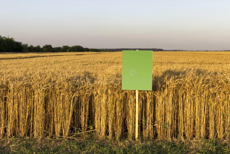 Campo de trigo com placa vazia para a descrição fotografia de stock