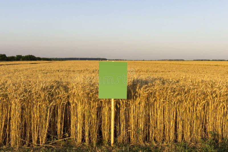 Campo de trigo com placa vazia para a descrição foto de stock
