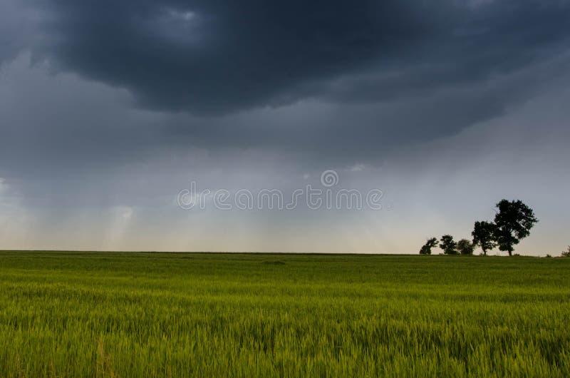campo de trigo e nuvens de tempestade verdes no dia de verão imagem de stock