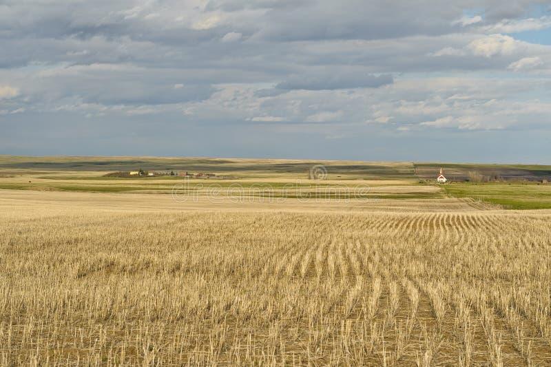 Campo de trigo e vila pequena em pradarias canadenses fotografia de stock