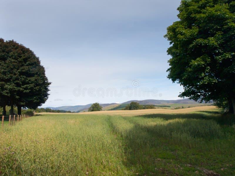 Campo de trigo em Glen Clova fotografia de stock royalty free