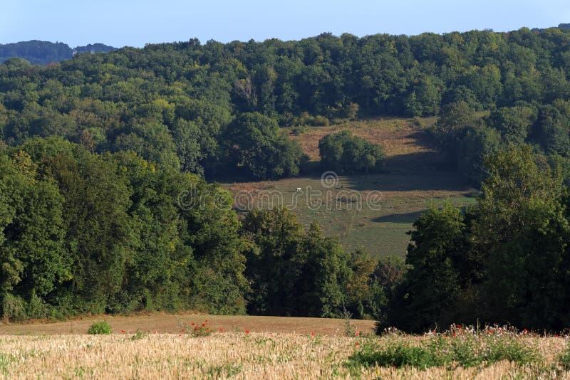 Campo de trigo en el parque de naturaleza regional francés de Vexin fotografía de archivo libre de regalías