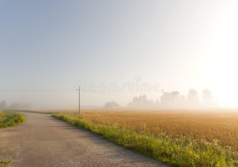 Campo de trigo en niebla foto de archivo