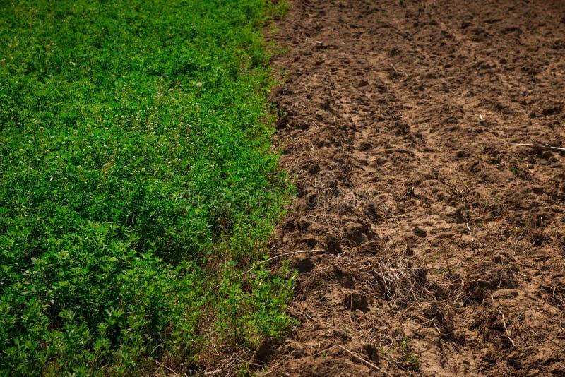 Campo de trigo a medias verde en el sol de la primavera y la media tierra unworked fotografía de archivo