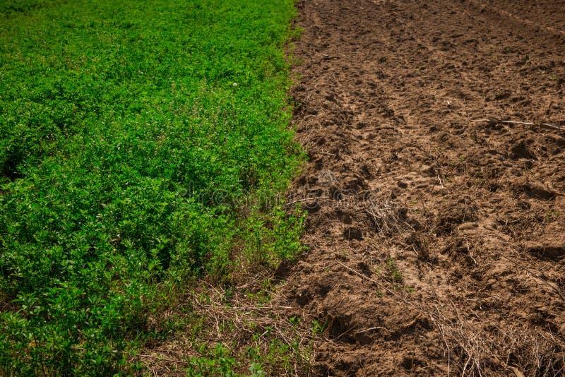 Campo de trigo a medias verde en el sol de la primavera y la media tierra unworked imagen de archivo