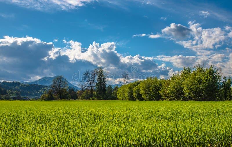 Campo de trigo sob um céu nebuloso imagens de stock royalty free
