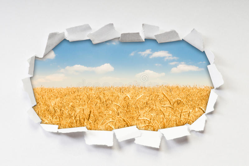 Campo de trigo a través del agujero imágenes de archivo libres de regalías